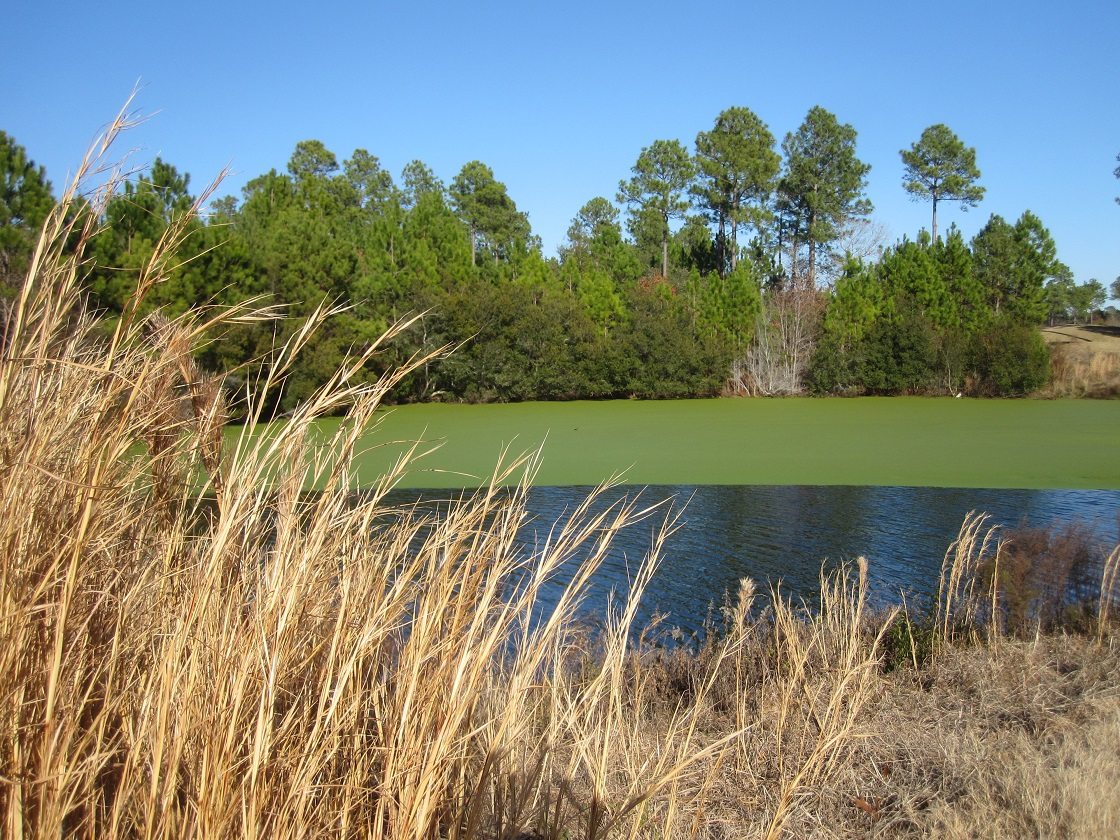 golf course at Winding River Plantation
