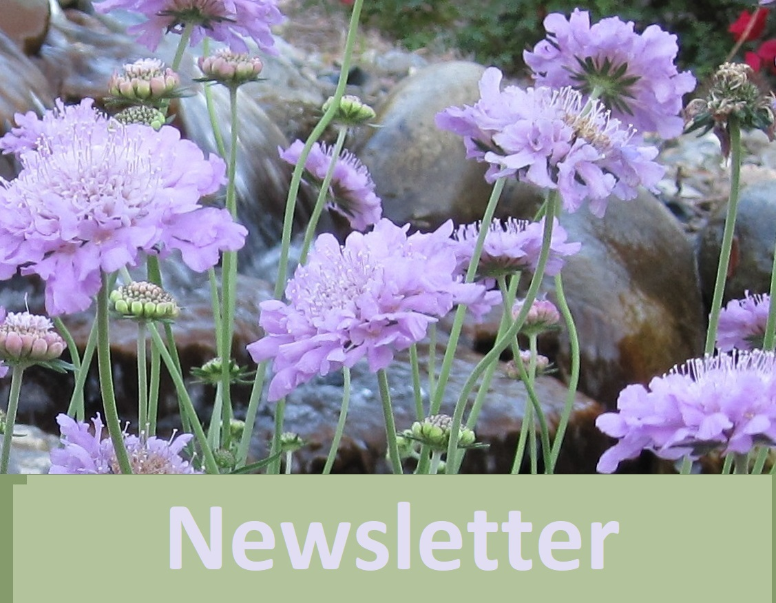 Real Estate Newsletter and coastal NC flowers