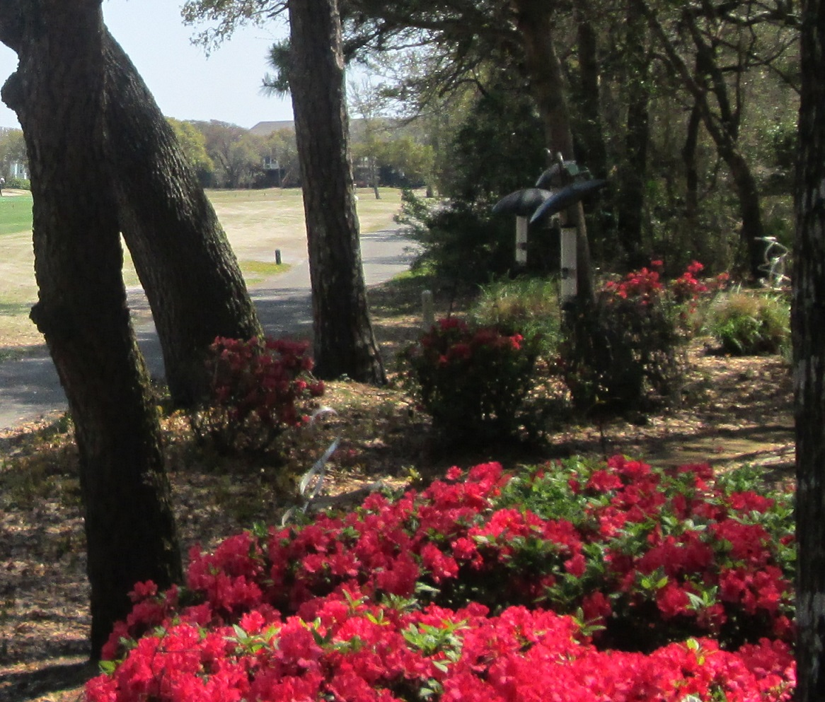 North Carolina flowers golf course pictures