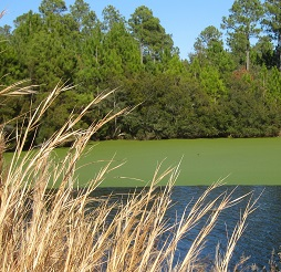 Brunswick County golf community Winding River Plantation